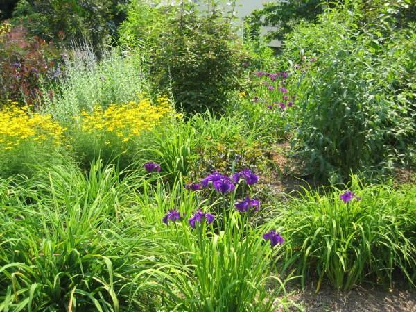 Fran Sorin Garden Design